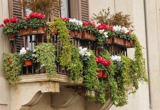 Kwiaty doniczkowe na balkon - niech balkon się zazieleni!