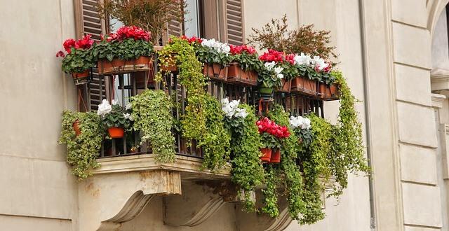 Kwiaty Doniczkowe Na Balkon Niech Balkon Się Zazieleni