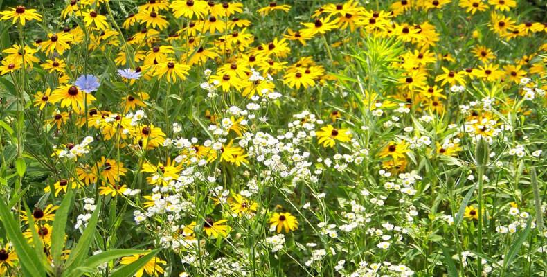 Kwiaty w wiejskim ogrodzie