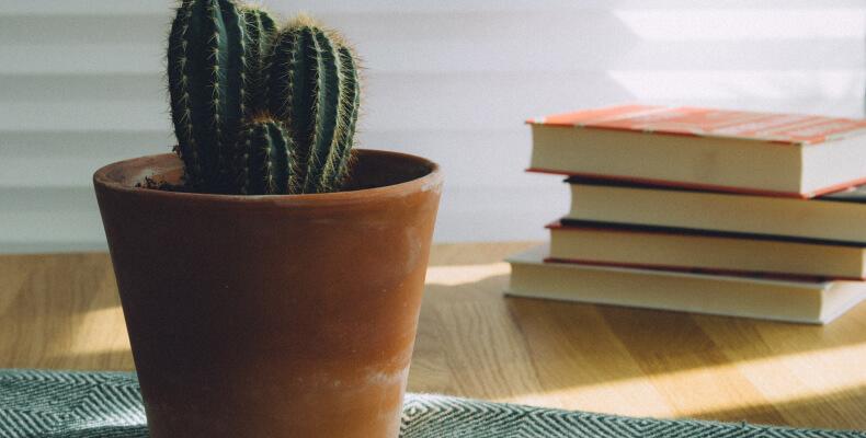 Pielęgnacja kaktusów