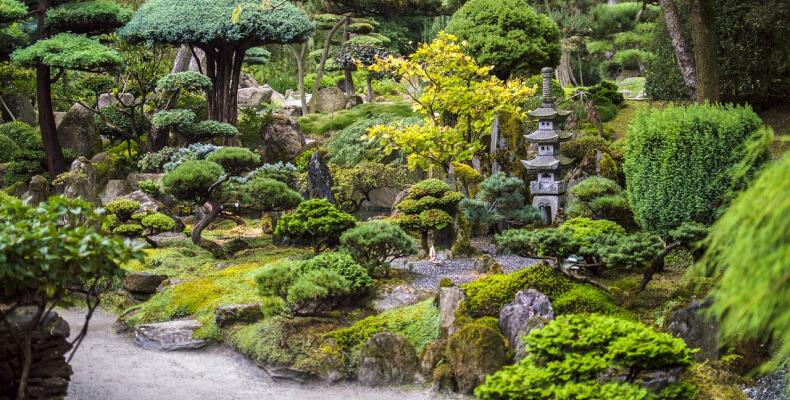 Rośliny do ogrodu japońskiego