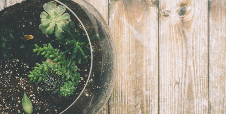 Przesadzanie kwiatów - kwiaty na balkon i taras