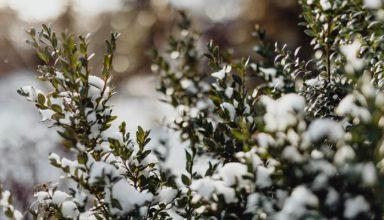 Jak dbać o ogród zimą?