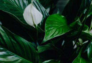 najzdrowsze kwiaty do sypialni