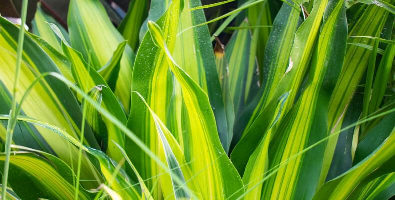 rośliny oczyszczające powietrze do sypialni