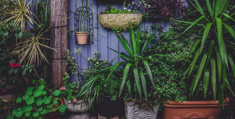 Październik w ogrodzie - przenoszenie roślin do domu