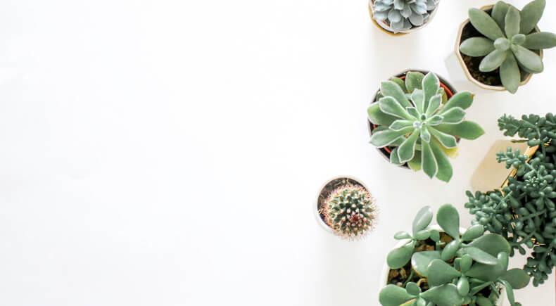 Sukulenty i kaktusy w domu