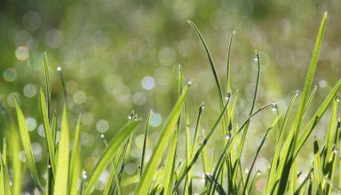 Jak zasiać trawę - trawnik przed domem