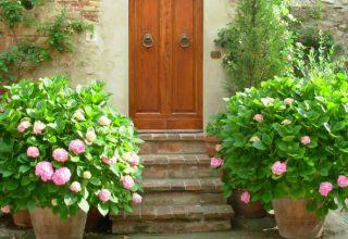 Ozdobne rośliny ogrodowe - jakie rośliny do ogrodu wybrać