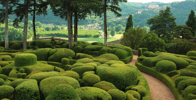 Kształtowanie i przycinanie krzewów ozdobnych