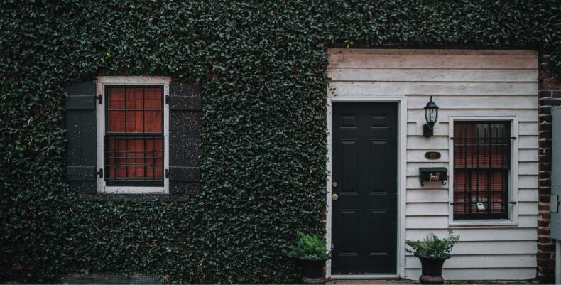 Bluszcz - sposób na ochłodzenie mieszkania latem
