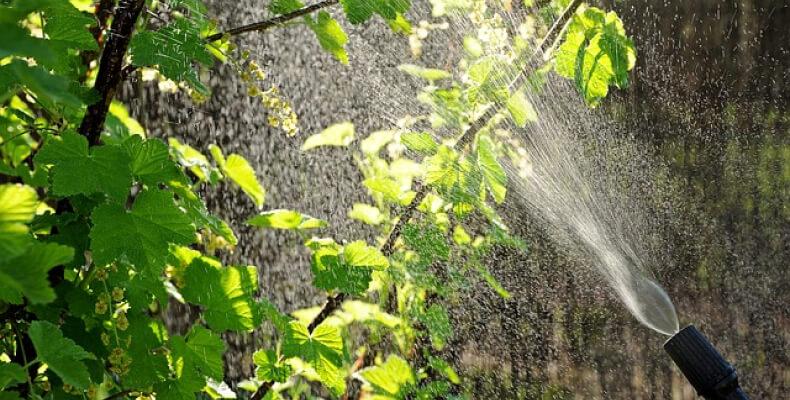 Opryskiwacz - sposób na mszyce w ogrodzie