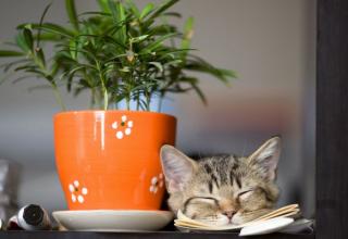 Rośliny domowe trujące dla kota