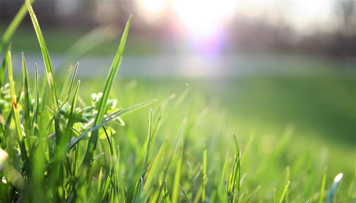 Wiosenne prace w ogrodzie - trawnik pielęgnacja