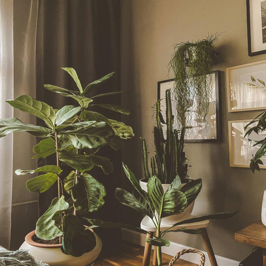 Najlepsze kwiaty do jasnych pomieszczeń