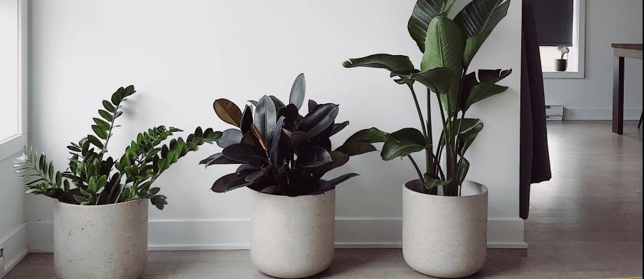 Jak zwiększyć wilgotność powietrza