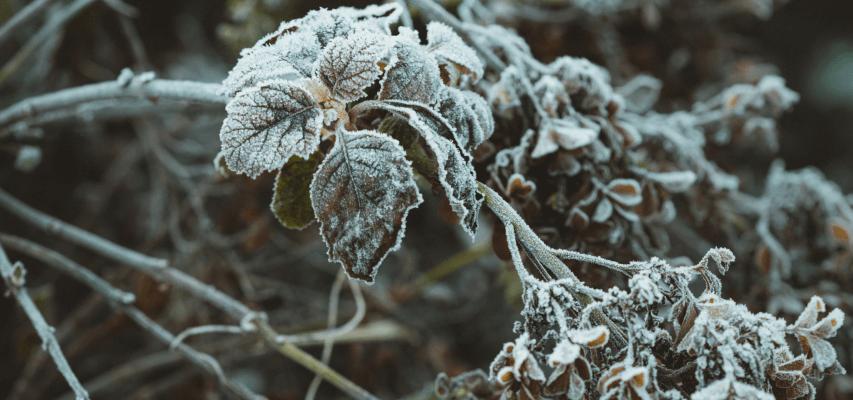 Przygotowanie ogrodu na zimę - jak przygotowac ogród warzywny na zimę?