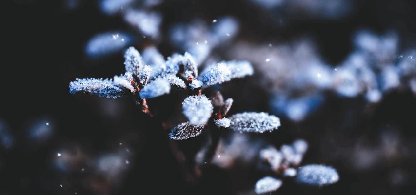 Jak przygotować ogród na zimę? Jak przygotować ogród warzywny na zimę? Zobacz!